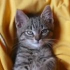 Damit der Sitzsack nicht als Katzentoilette missbraucht wird.