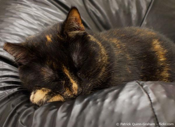 Katze pinkelt in den Sitzsack! – Was tun? - SitzsackProfi