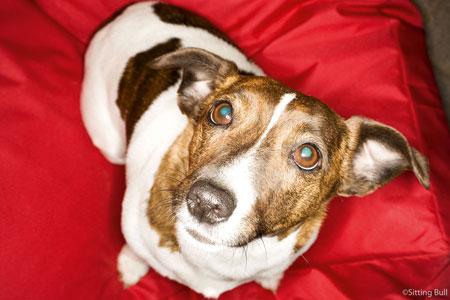 Süsser Hund auf seinem Hundebett